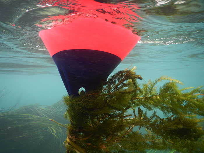 View of buoy from below surface