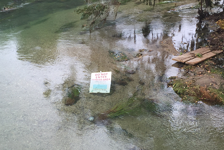 Existing sign in San Marcos River